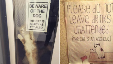 Featured-Cat-Signs-FB