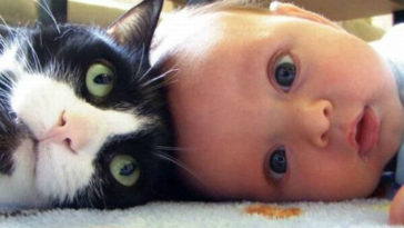 Featured-babies-cats-fb