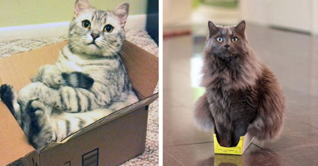 Featured-cat-refuses-boxes-too-small-fb