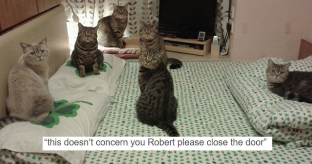 Featured-funny-tumblr-cats-fb