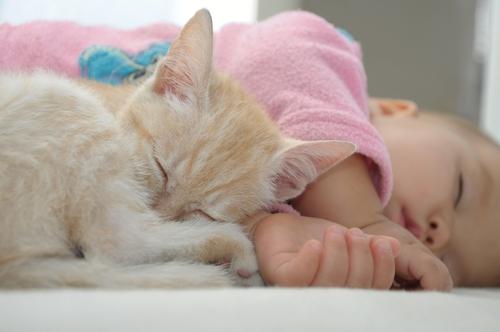 babies-cats-1
