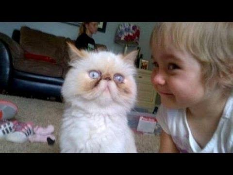 babies-cats-10