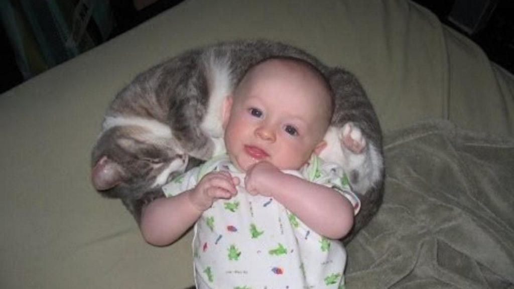 babies-cats-11