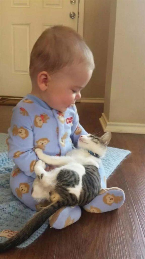 babies-cats-12