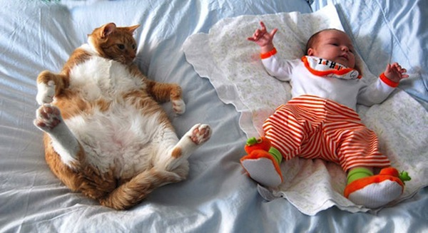 babies-cats-13