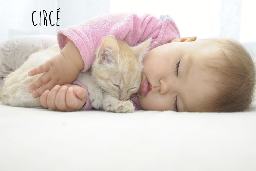 babies-cats-14