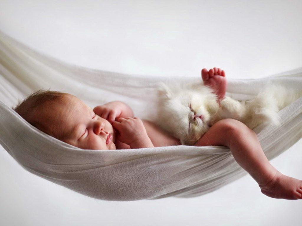 babies-cats-15
