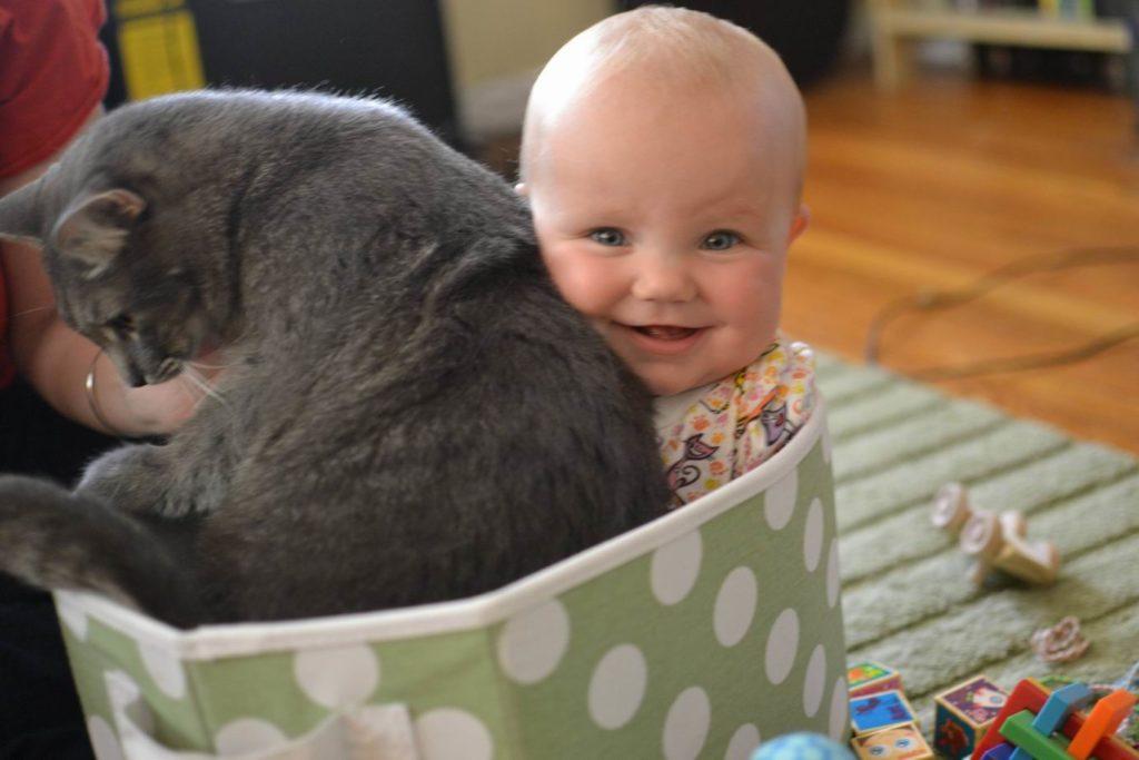 babies-cats-16