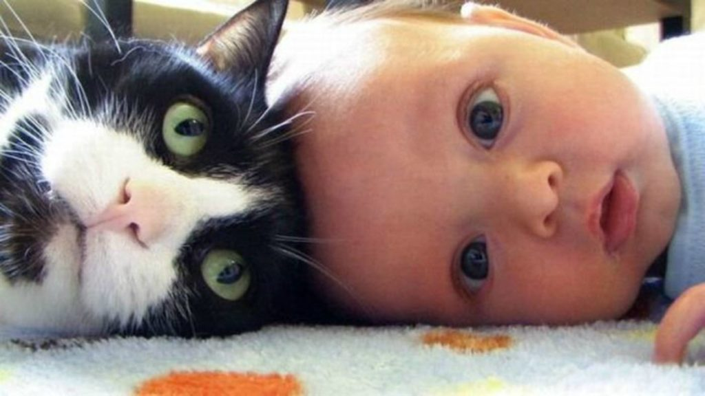 babies-cats-17