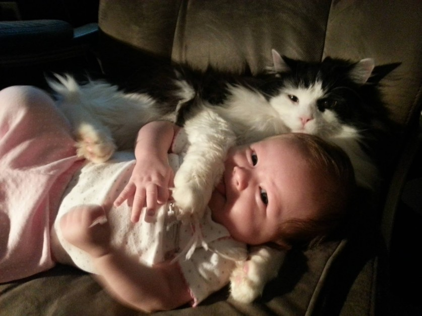 babies-cats-19