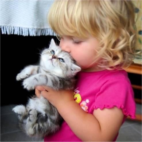 babies-cats-2