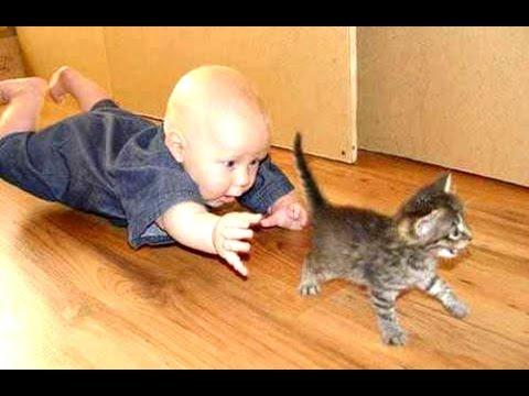 babies-cats-21