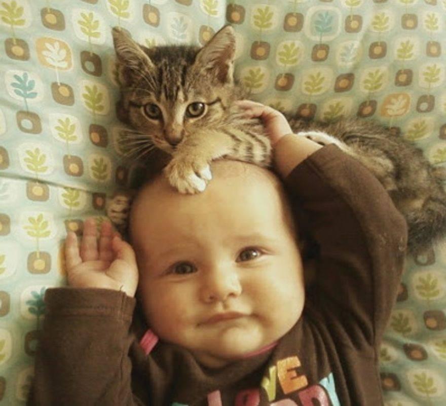 babies-cats-22