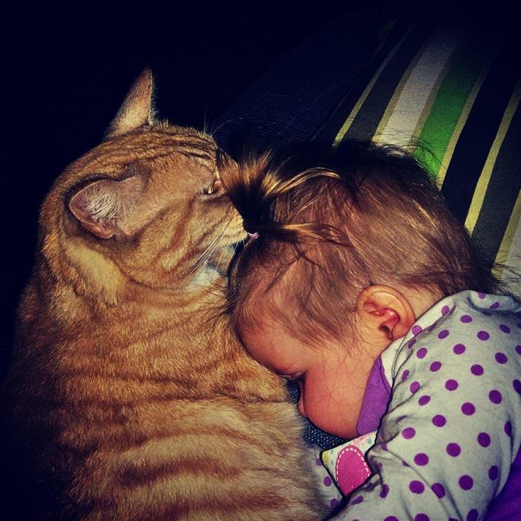 babies-cats-23