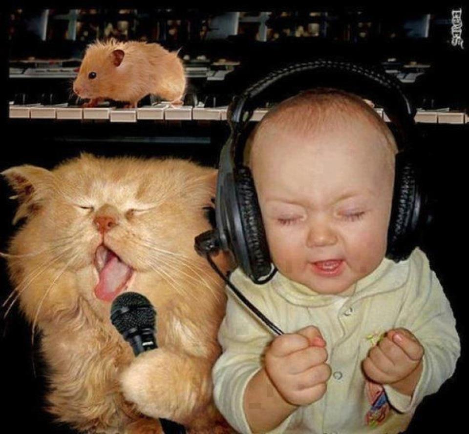 babies-cats-26