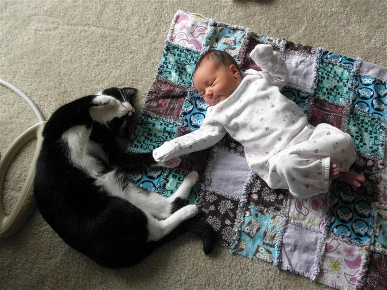 babies-cats-27