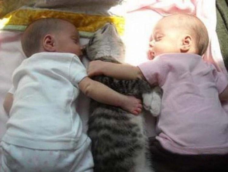 babies-cats-3