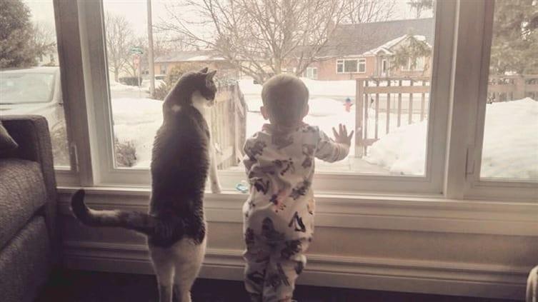 babies-cats-4