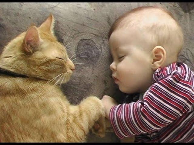 babies-cats-5