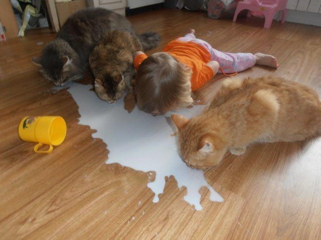 babies-cats-6