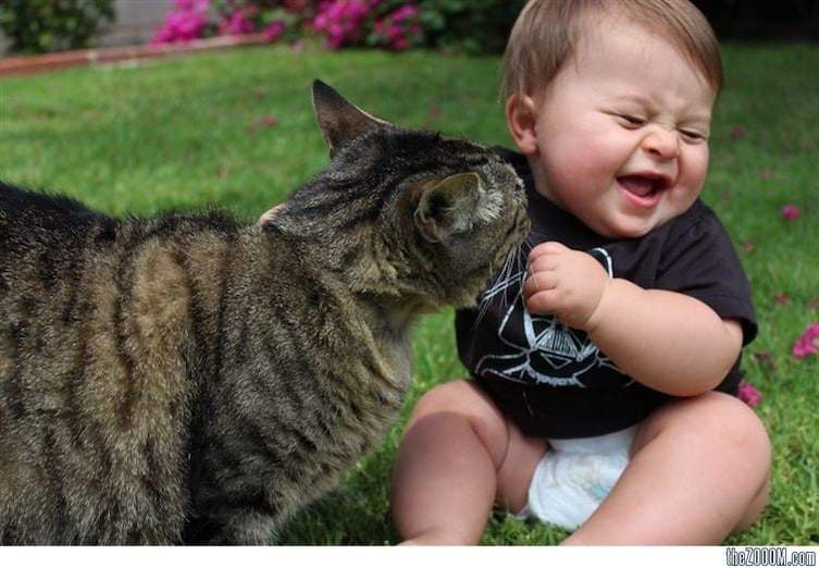 babies-cats-7