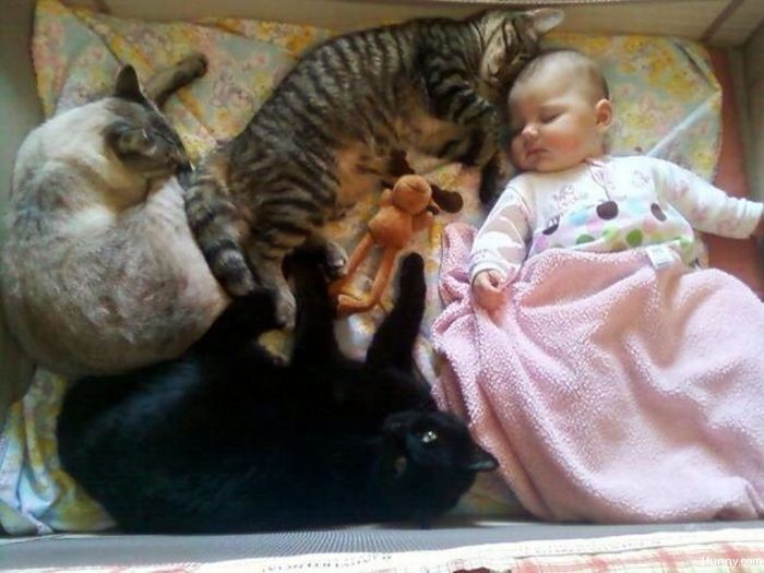 babies-cats-9