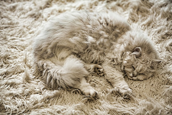camoflaged-cats-12