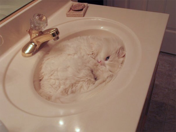 camoflaged-cats-14