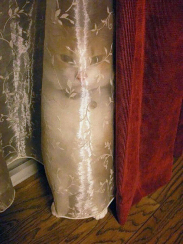 camoflaged-cats-21