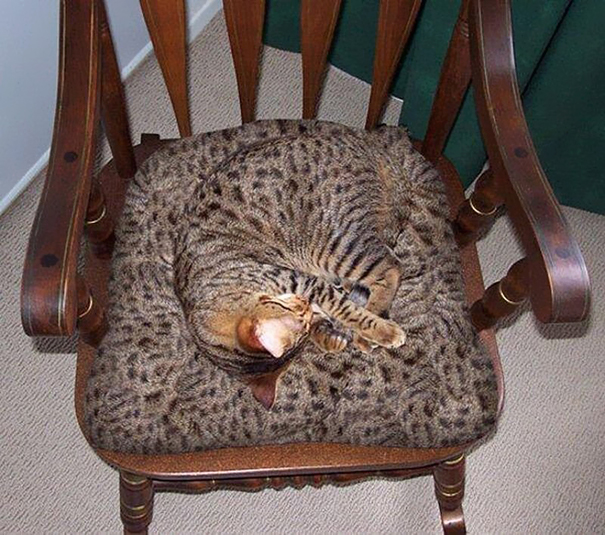 camoflaged-cats-25