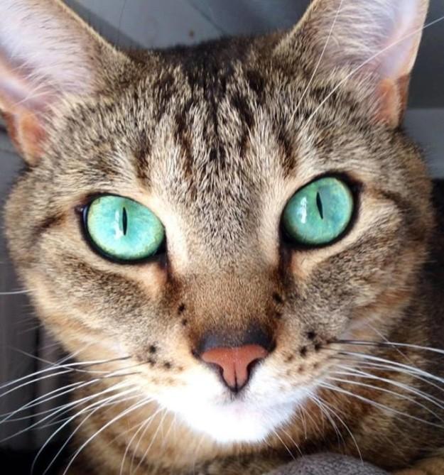 cat-eyes-01