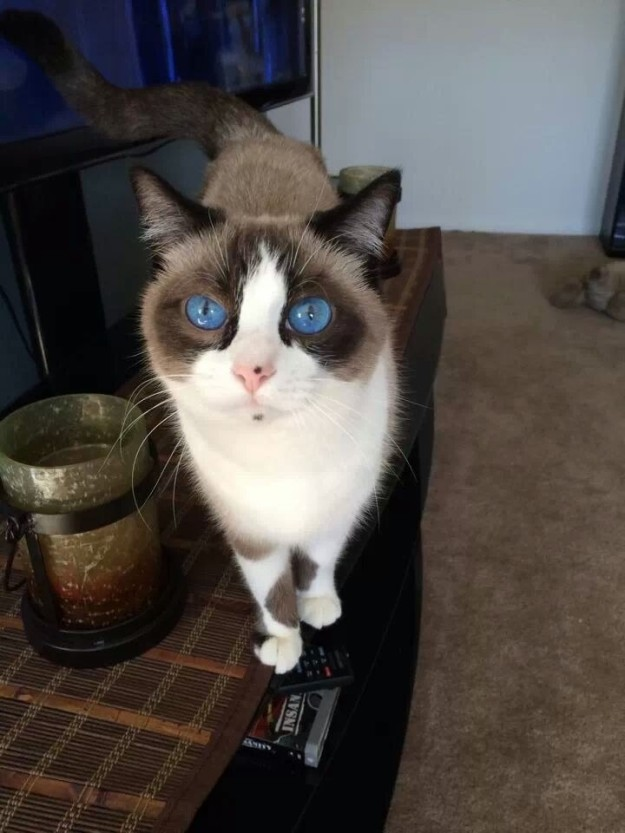 cat-eyes-02