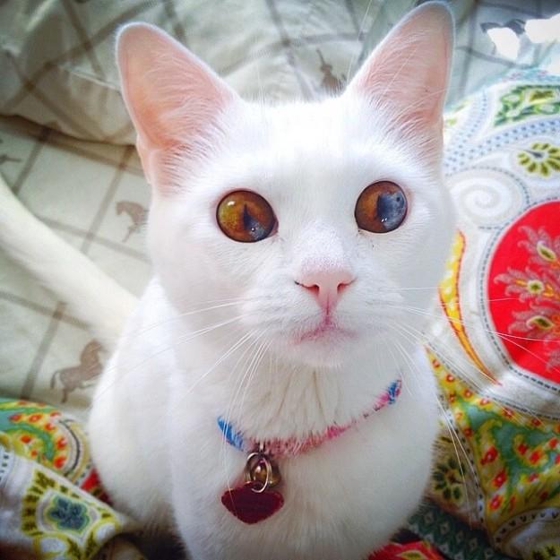 cat-eyes-03