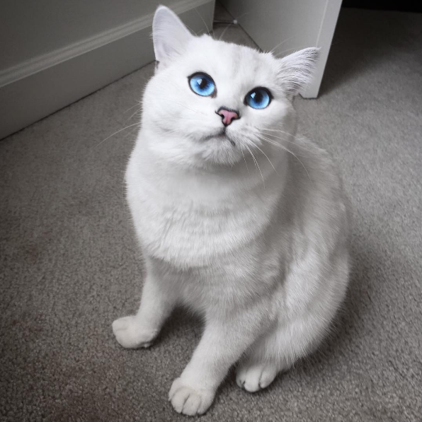 cat-eyes-04