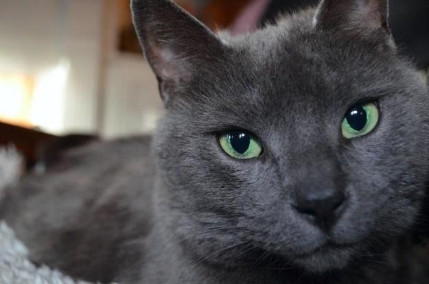 cat-eyes-05