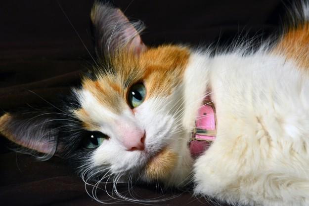 cat-eyes-06