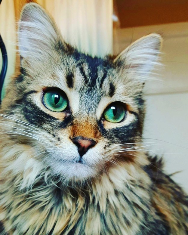 cat-eyes-07