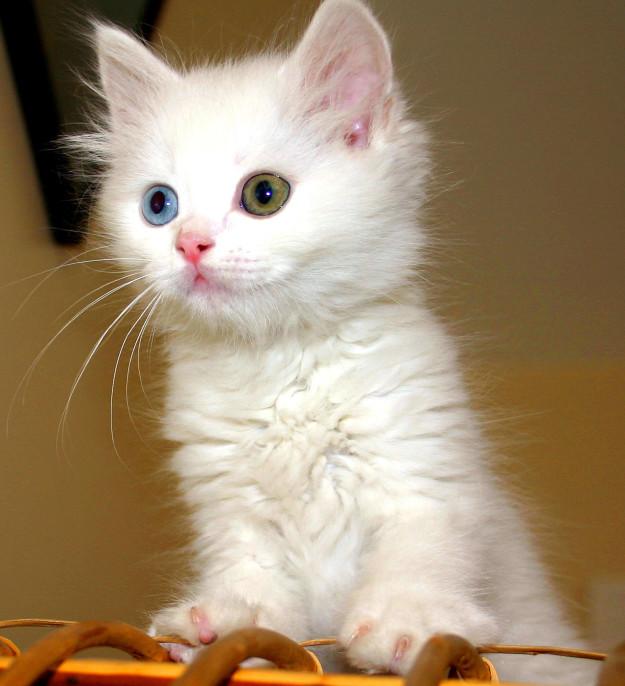 cat-eyes-08