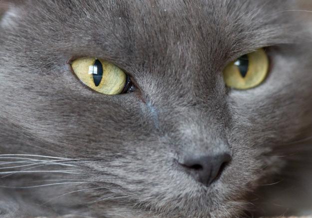 cat-eyes-09-1