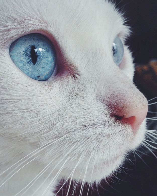cat-eyes-10