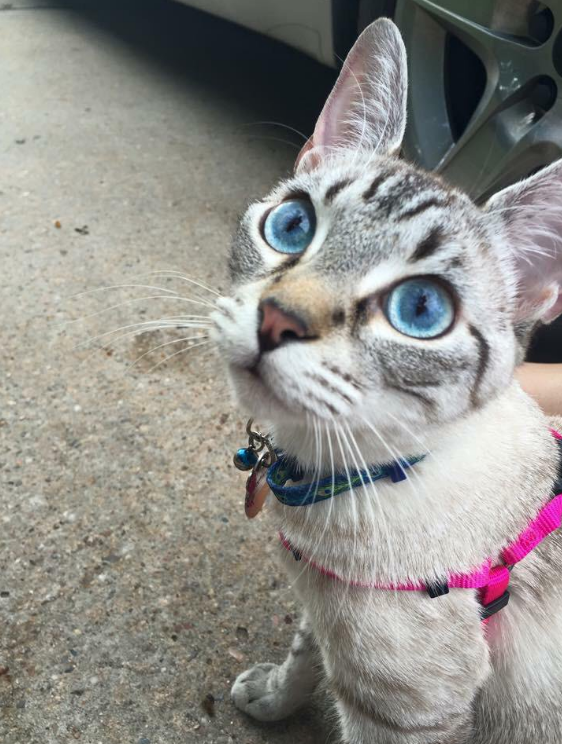 cat-eyes-12