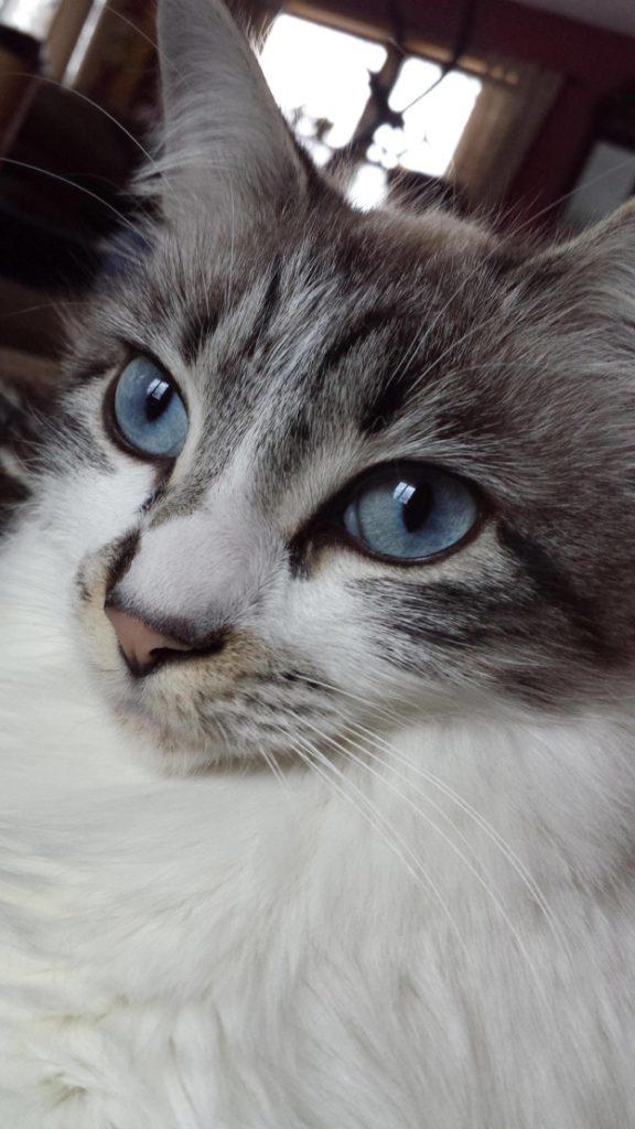 cat-eyes-13
