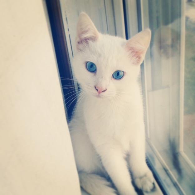 cat-eyes-15