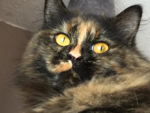 cat-eyes-16