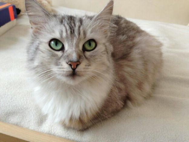 cat-eyes-17