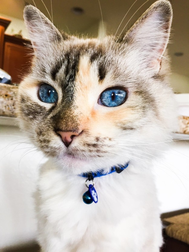 cat-eyes-18