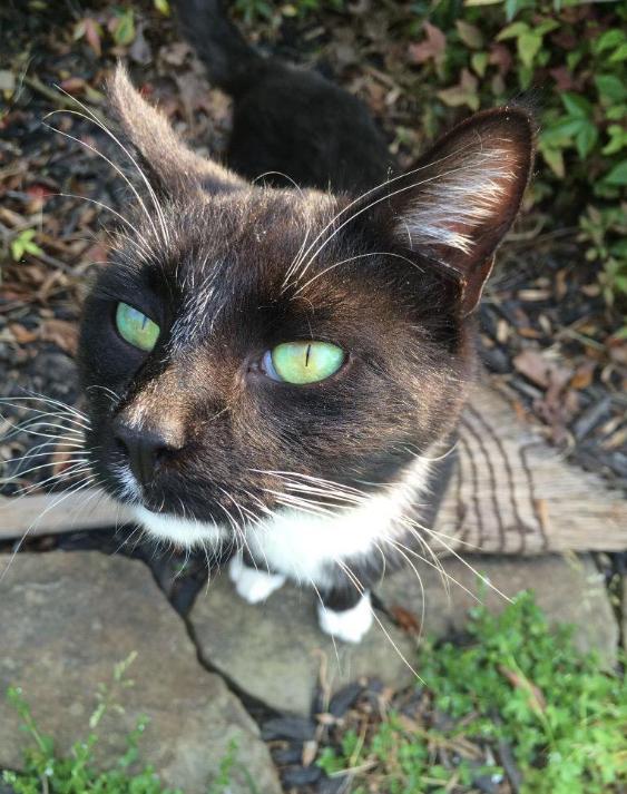cat-eyes-20