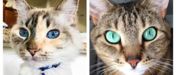 cat-eyes-feature-1