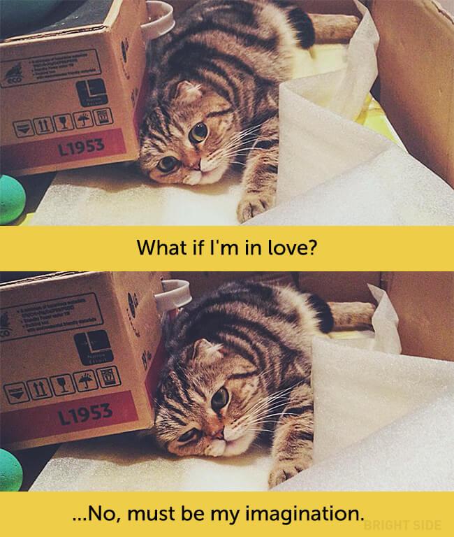 cat-human-eyes-05