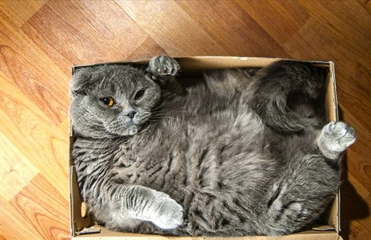 cat-refuses-boxes-too-small-1